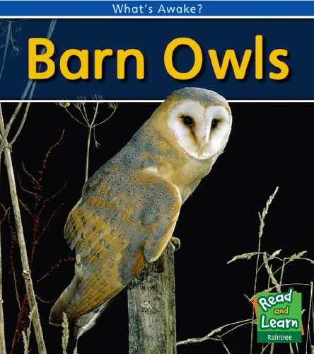 Barn Owls (Hardcover): Patricia Whitehouse
