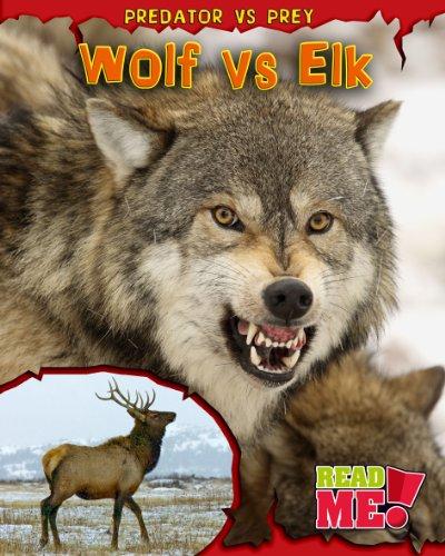 9781406218718: Wolf vs Elk (Read Me!: Predator vs Prey)
