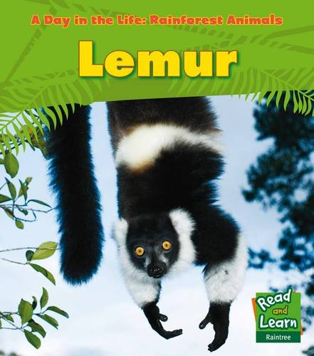 9781406218770: Lemur (Young Explorer: A Day in the Life: Rainforest Animals)