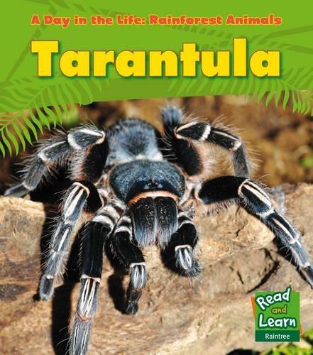 9781406218824: Tarantula (A Day in the Life: Rainforest Animals)