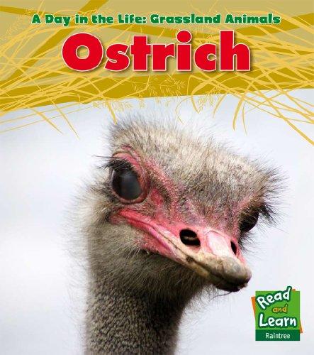 Ostrich (Day in the Life. Grassland Animals): Louise Spilsbury