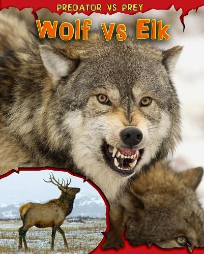 9781406221435: Wolf vs Elk (Read Me!: Predator vs Prey)