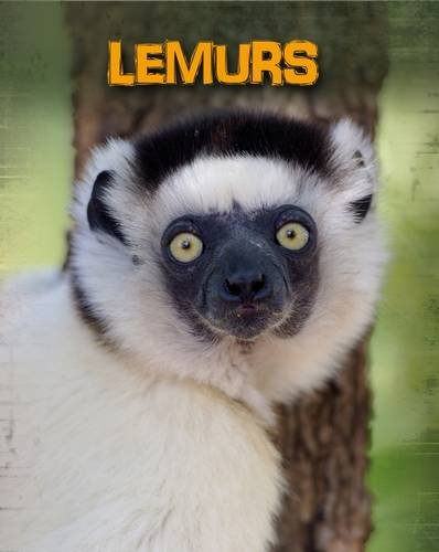 9781406233117: Lemurs (Infosearch: Living in the Wild: Primates)