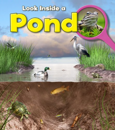9781406251289: Pond (Young Explorer. Book Band Level Turquoise)