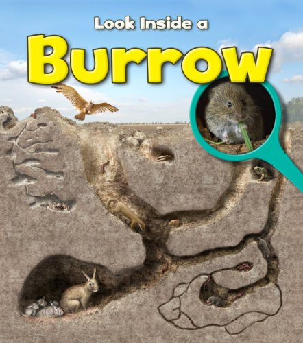 9781406251326: A Burrow (Young Explorer: Look Inside)