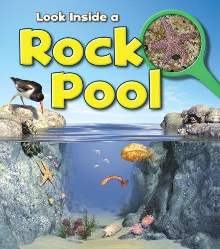 Rock Pool (Look Inside): Louise Spilsbury