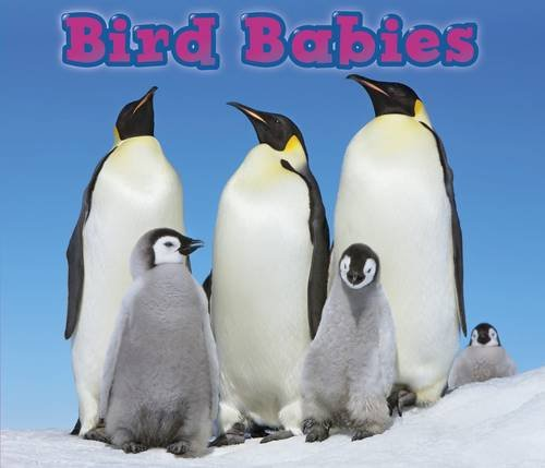 9781406259230: Bird Babies (Animal Babies)