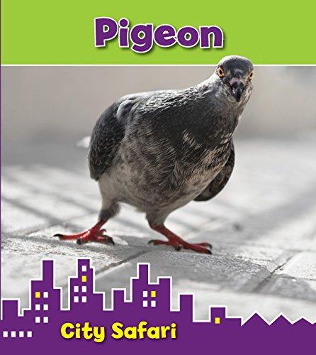 Pigeon: City Safari (Read and Learn: City Safari): Thomas, Isabel