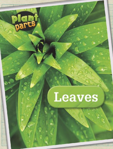 9781406274783: Leaves (Raintree Perspectives: Plant Parts)