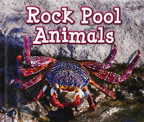 Rock Pool Animals (Acorn: Animals in Their Habitats): Smith, Sian