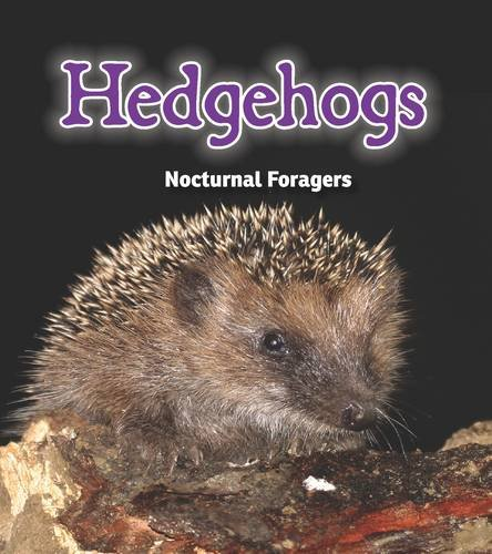 9781406282917: Hedgehogs: Nocturnal Foragers (Night Safari)