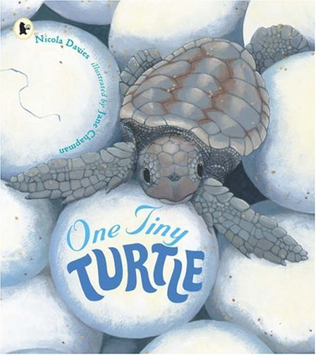 9781406311983: One Tiny Turtle