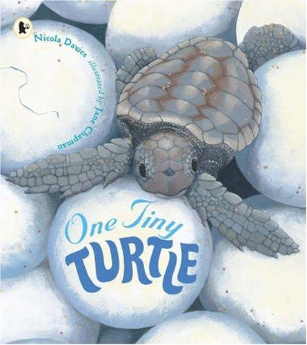 9781406311983: One Tiny Turtle (Nature Storybooks)