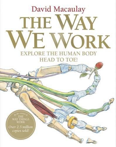 The Way We Work: Macaulay, David