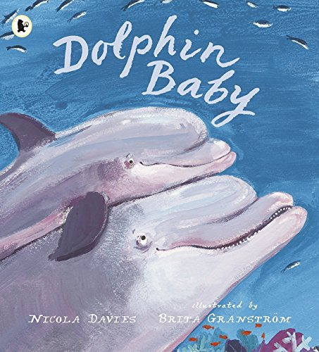 9781406344011: Dolphin Baby (Nature Storybooks)