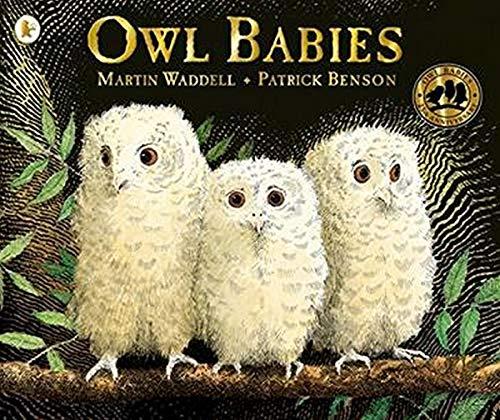 9781406349573: Owl Babies