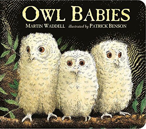 9781406364477: Owl Babies