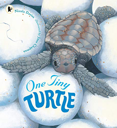 9781406364637: One Tiny Turtle (Nature Storybooks)