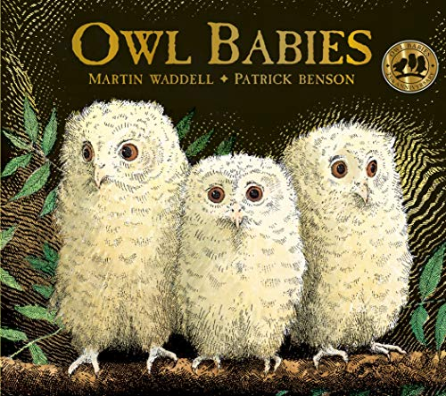 9781406374377: Owl Babies