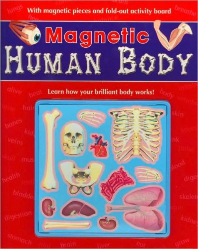 9781407505992: Magnetic Human Body (Magnetic Workbooks)