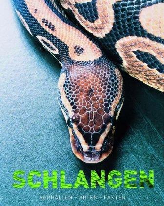 9781407523866: Schlangen