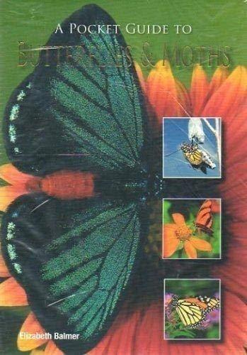 9781407574486: A Pocket Guide to Butterflies & Moths