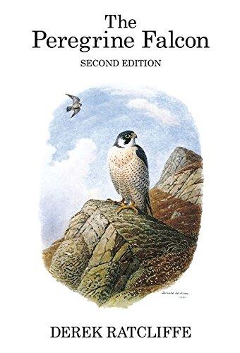 9781408136843: The Peregrine Falcon (Poyser Monographs)