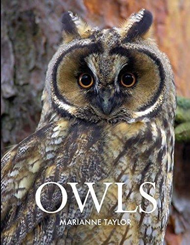 9781408155530: Owls