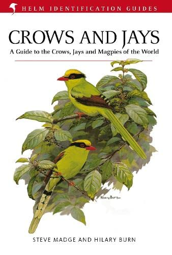 9781408157381: Crows and Jays (Helm Identification Guides)