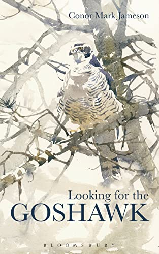 9781408164877: Looking for the Goshawk