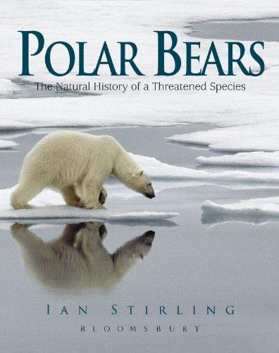 9781408190685: Polar Bears