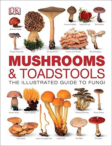 9781409332770: Mushrooms & Toadstools