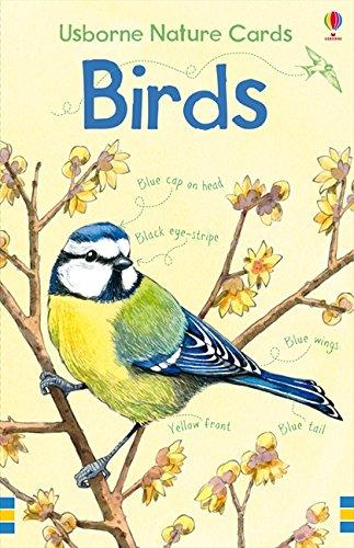 9781409509486: Birds (Spotter's Cards)