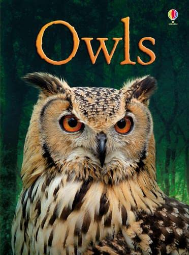 9781409530664: Owls (Beginners)