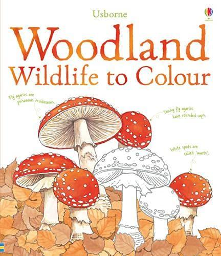 9781409547334: Woodland Wildlife to Colour