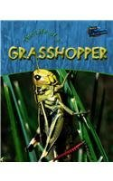 9781410905376: Life of a Grasshopper (Life Cycles (Raintree Hardcover))