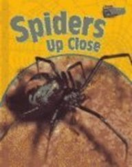 Spiders Up Close (Raintree Perspectives)