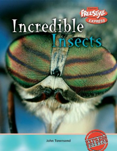 9781410917157: Incredible Insects (Incredible Creatures)
