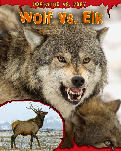 9781410939500: Wolf vs. Elk (Predator Vs. Prey)