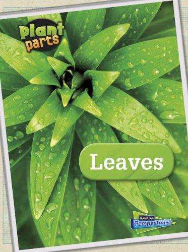 9781410954275: Leaves (Raintree Perspectives)