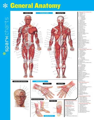 General Anatomy Sparkcharts: Sparknotes