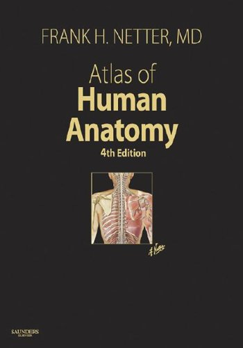 Atlas Of Human Anatomy 4th Edition By Frank H Netter Md Saunders