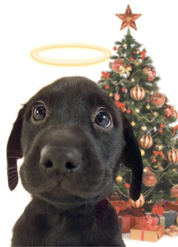 9781416200468: Lab Pup with Christmas Tree Boxed Holiday Cards