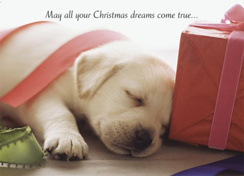 9781416200505: Puppy Dreams Boxed Holiday Cards