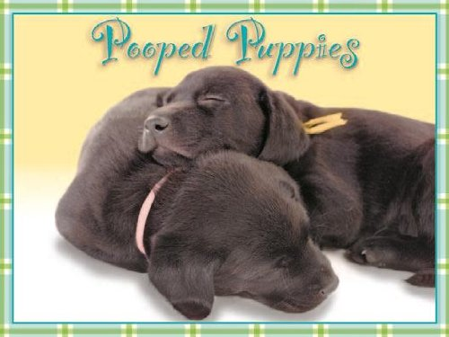 9781416228813: Pooped Puppies Notecards