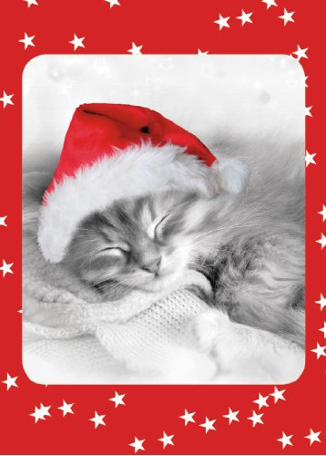 9781416229070: Fuzzy Christmas Kitten Boxed Holiday Cards
