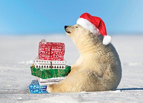9781416233930: Polar Bear Presents Boxed Holiday Cards