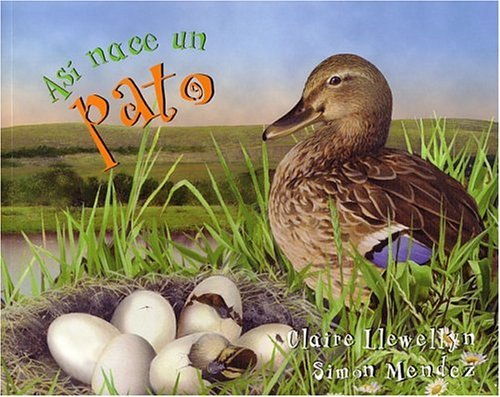 9781417693528: Asi Nace...Un Pato (A Duck Was Born) (Turtleback School & Library Binding Edition) (Spanish Edition)