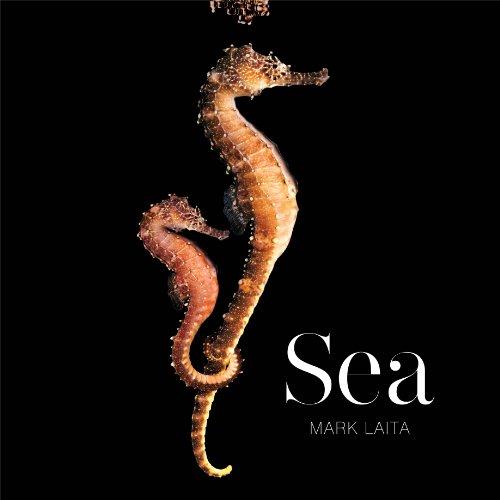 9781419700873: Sea