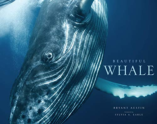 9781419703843: Beautiful Whale